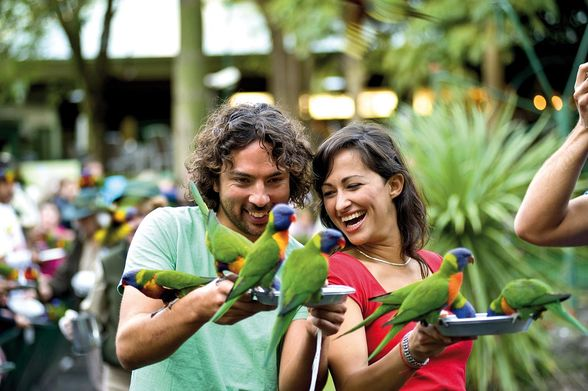 Bird feeding at Currumbin Wildlife Sanctuary