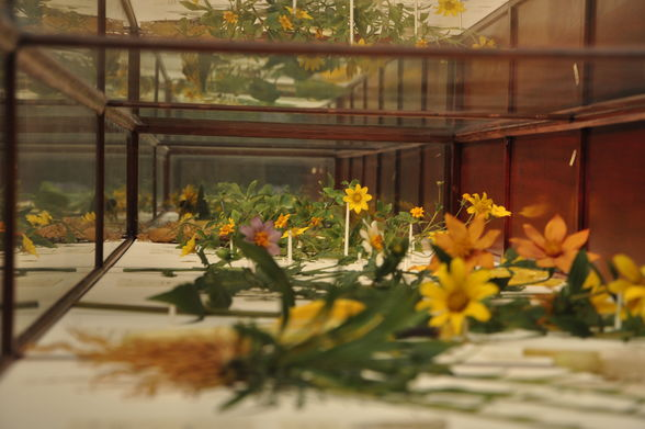 """""""Glass Flowers"""" at the Harvard Museum of Natural History (©Nate Dean)"""