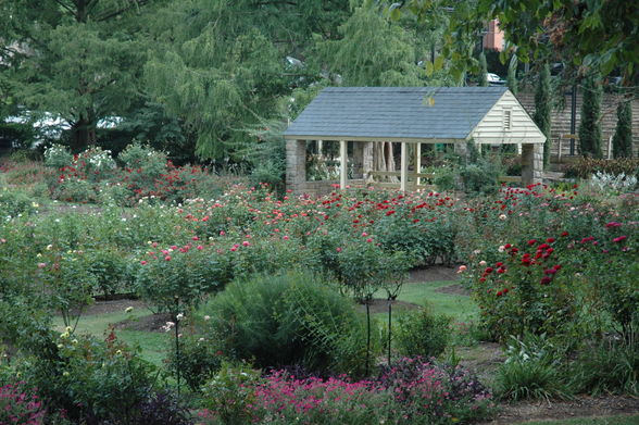 Raleigh Little Theater's Rose Garden is a 6.5-acre oasis with 60 flower beds featuring 56 varieties of roses.