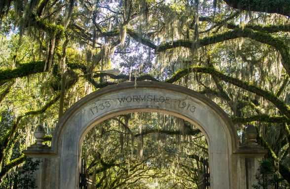 Visitors looking for a more iconic Savannah experience should hike the Wormsloe Historic Site Trail | WhereTraveler
