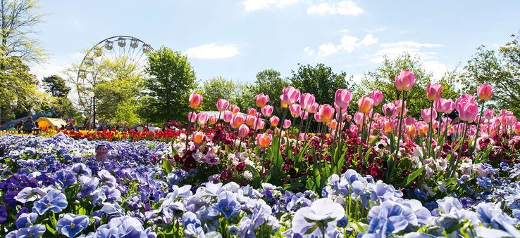 Canberra, Australia's capital city, is famous for its flower festival, Floriade.