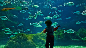 Children's Aquarium