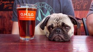 Dine with your dog on the patio at any of O.H.S.O.'s three Valley locations. (Courtesy O.H.S.O. Brewery)