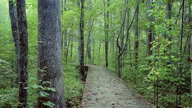 Hike up to 3 lush miles of trails cloaked in Eastern Hemlock trees and other mountain plant species at Hemlock Bluffs Nature Preserve. (Courtesy Bill Stice)