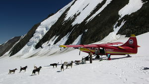 Preparing for a dog sled tour adventure