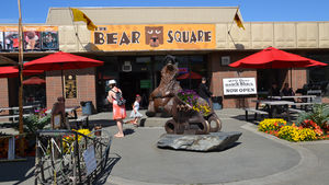The Bear Square