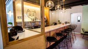 Cats and capuccinos at Neko on Capitol Hill