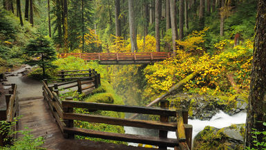 Olympic National Park is home to over a million acres of pristine landscape | WhereTraveler