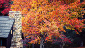 Cabin in Shenandoah National Park during the fall