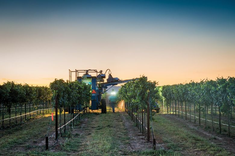 Bending Branch Winery with harvesting equipment