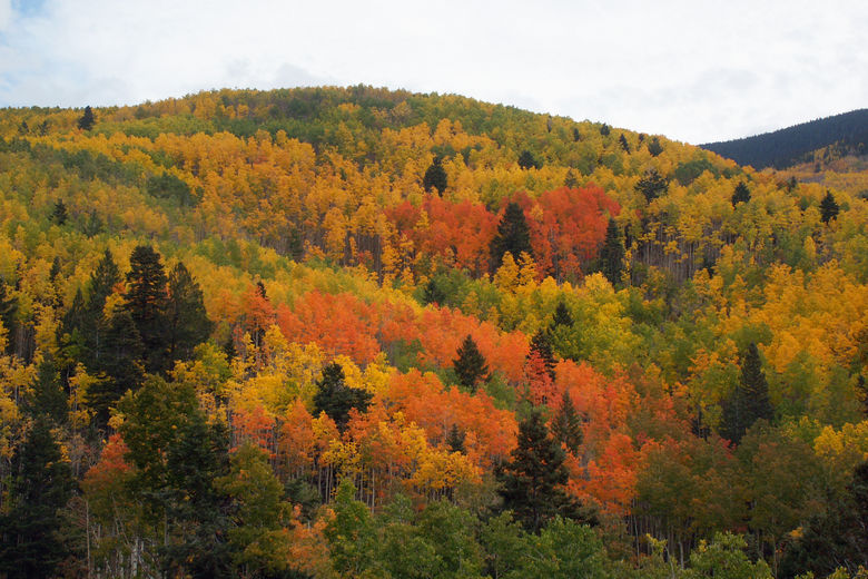 Fall colors in New Mexico