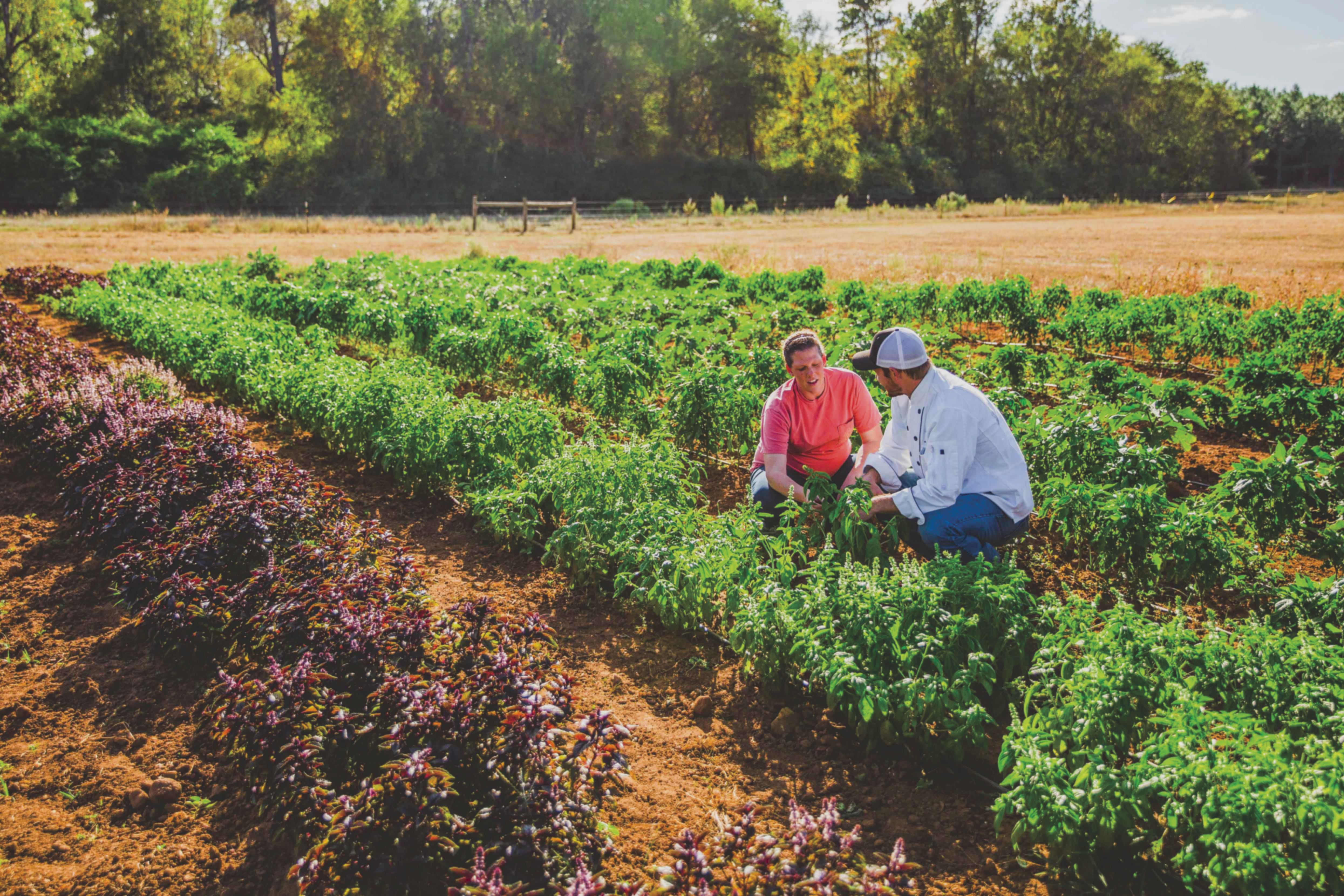 The Myths And Truths About Atlanta S Farm To Table Movement